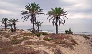 Barraca-Quemada-Murcia